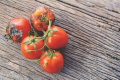 腐烂的小组在老木背景的蕃茄 免版税库存图片