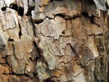 腐烂的收缩的干燥木头纹理  免版税库存图片