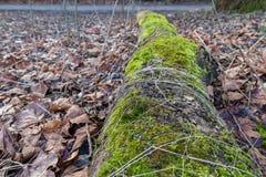 腐烂的日志用青苔和其他植物生长填装了 库存照片