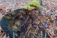 腐烂的日志用青苔和其他植物生长填装了 图库摄影
