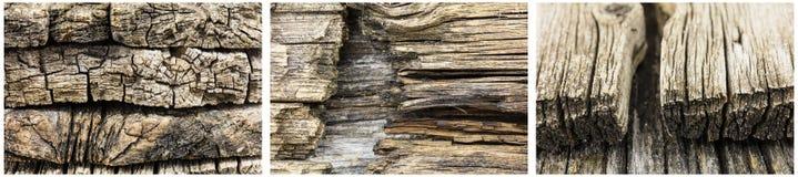 腐烂的木头上末端背景 免版税库存图片
