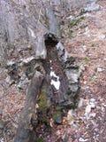 腐烂的木头在森林里 免版税库存图片
