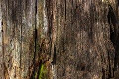 腐烂的木头自然本底在非常老树桩的 老树桩的纹理 库存图片