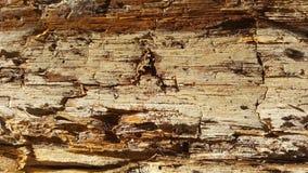 腐烂的木抽象纹理 库存照片