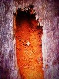 腐烂的木树干 库存照片