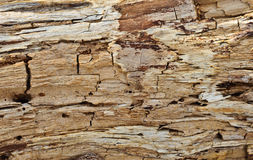 腐烂的木纹理 库存图片