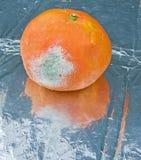 腐烂的果子 库存照片