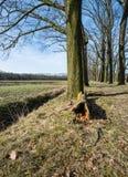 腐烂的树干倒塌了 免版税库存照片