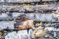 腐烂的树干在森林背景中 免版税库存图片