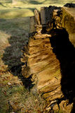 腐烂的树干在莱姆公园,斯托克波特高峰区国家公园彻斯特英国冬日 图库摄影