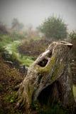 腐烂的树干 库存照片