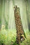 腐烂的树干 库存图片