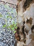 腐烂的树干 免版税图库摄影