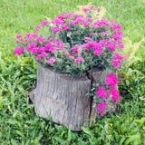 腐烂的树桩和开花的花 免版税库存图片