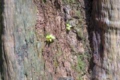 腐烂的老木头 免版税库存照片