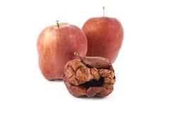 腐烂的苹果,被隔绝的背景 库存照片