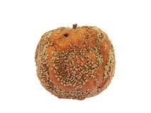 腐烂的苹果 免版税图库摄影
