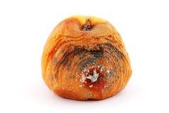 腐烂的苹果 库存照片