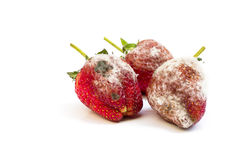 腐烂的草莓 免版税库存照片