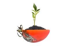 腐烂的蕃茄和绿色植物白色的 免版税库存图片