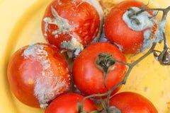 腐烂的蕃茄 库存图片