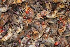 腐烂的螃蟹 免版税库存照片