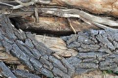 腐烂的结构树 免版税库存照片