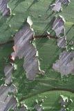 腐蚀的金属墙壁 免版税库存照片