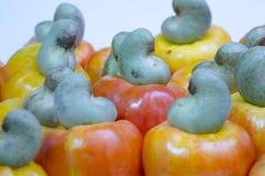 腰果是一个热带水果 库存图片