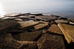 腹足动物的化石壳海滩 免版税图库摄影