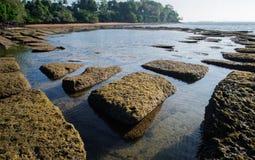 腹足动物的化石壳海滩 免版税库存图片