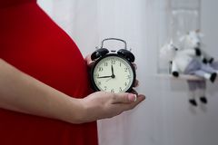 腹部孕妇 一件红色礼服的怀孕的女孩有闹钟的 库存照片