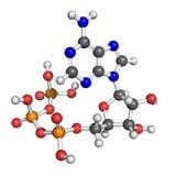 腺苷结构triphosphate 库存图片