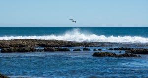 腾飞在蓝色孔的海鸥 免版税库存照片