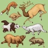 腾飞的镍耐热铜野兔兔子北棕熊鹿 跳跃设置野生森林的动物  例证百合红色样式葡萄酒 被刻记的手 向量例证