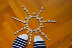 腿腿轰击壳蓝色白色灰色棕色木地板 免版税图库摄影