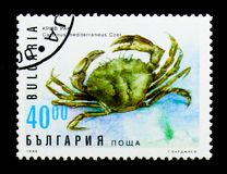 膏蟹Carcinus mediterraneus、植物群和动物区系serie,大约1996年 库存图片