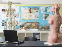 膝上型计算机和解剖模型在生物课 免版税库存照片