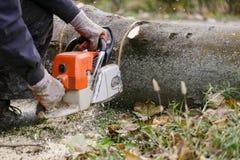 膝盖的人围拢与锯木屑切口下落的树与 库存图片