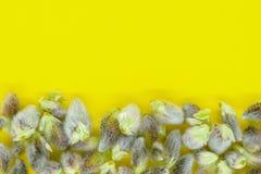 膨胀的褪色柳芽抽象背景  免版税库存照片