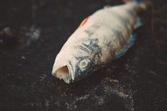 膨胀的死者毒害了在河的河岸的鱼谎言 库存照片