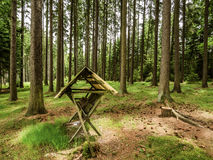 膳食饲养者鹿的在捷克森林里 库存图片