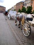 臀部和尾巴结辨的灰色马 免版税库存图片