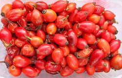 臀部 臀部上升了 在塑料碗的新鲜的有机红色野玫瑰果 免版税库存图片