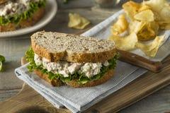 自创健康鸡丁沙拉三明治 免版税图库摄影