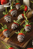 自创巧克力蘸了草莓 库存图片
