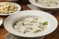 自创有机牡蛎炖肉开胃菜 库存照片