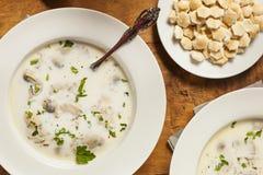 自创有机牡蛎炖肉开胃菜 图库摄影