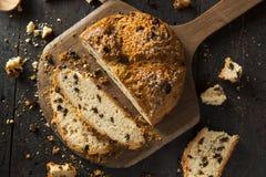 自创爱尔兰苏打面包 免版税库存照片