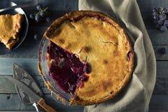 自创甜康科德紫葡萄饼 库存图片